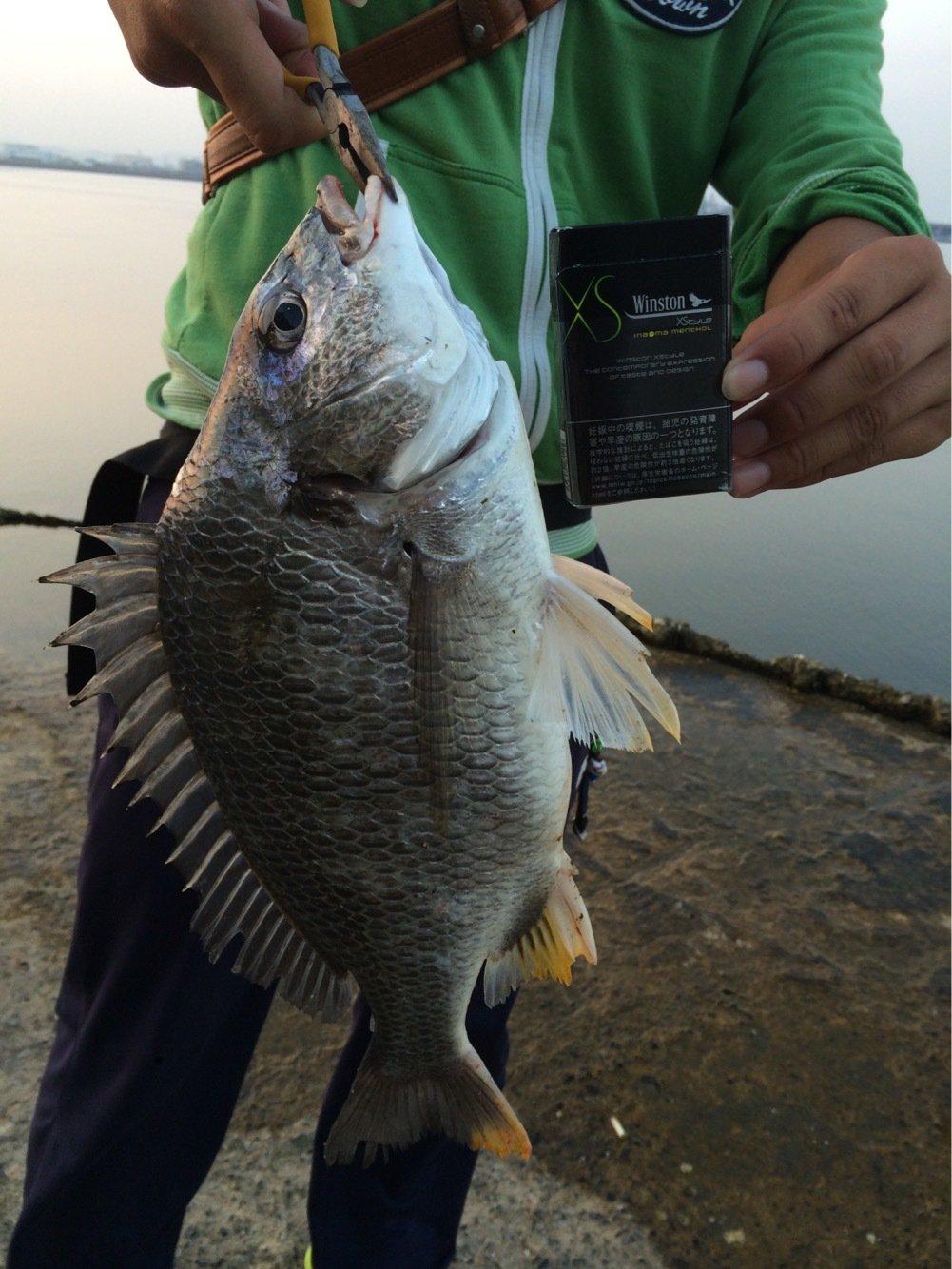 大体坊主さんの投稿画像,写っている魚はキチヌ