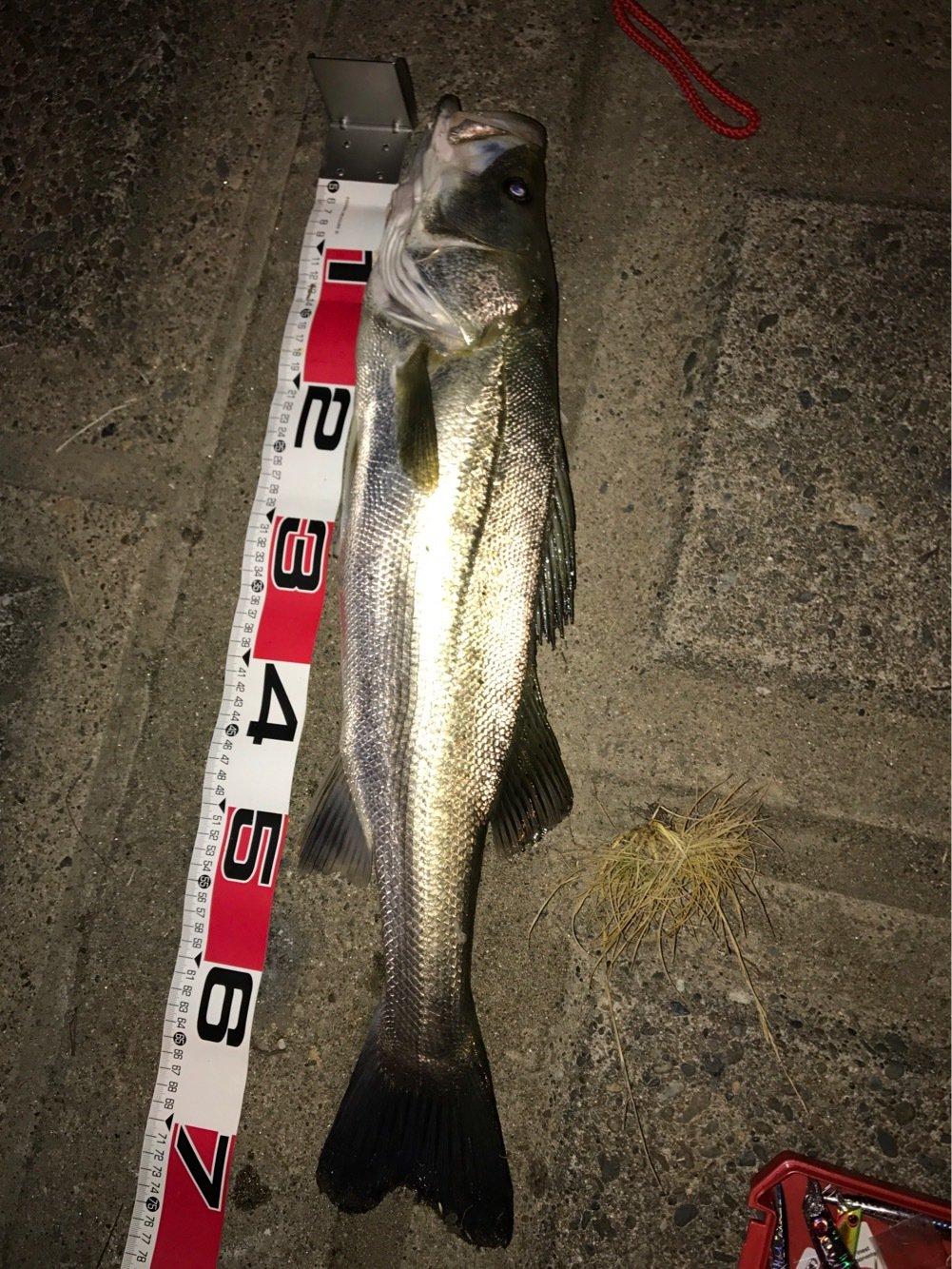 宮本拓さんの投稿画像,写っている魚はスズキ