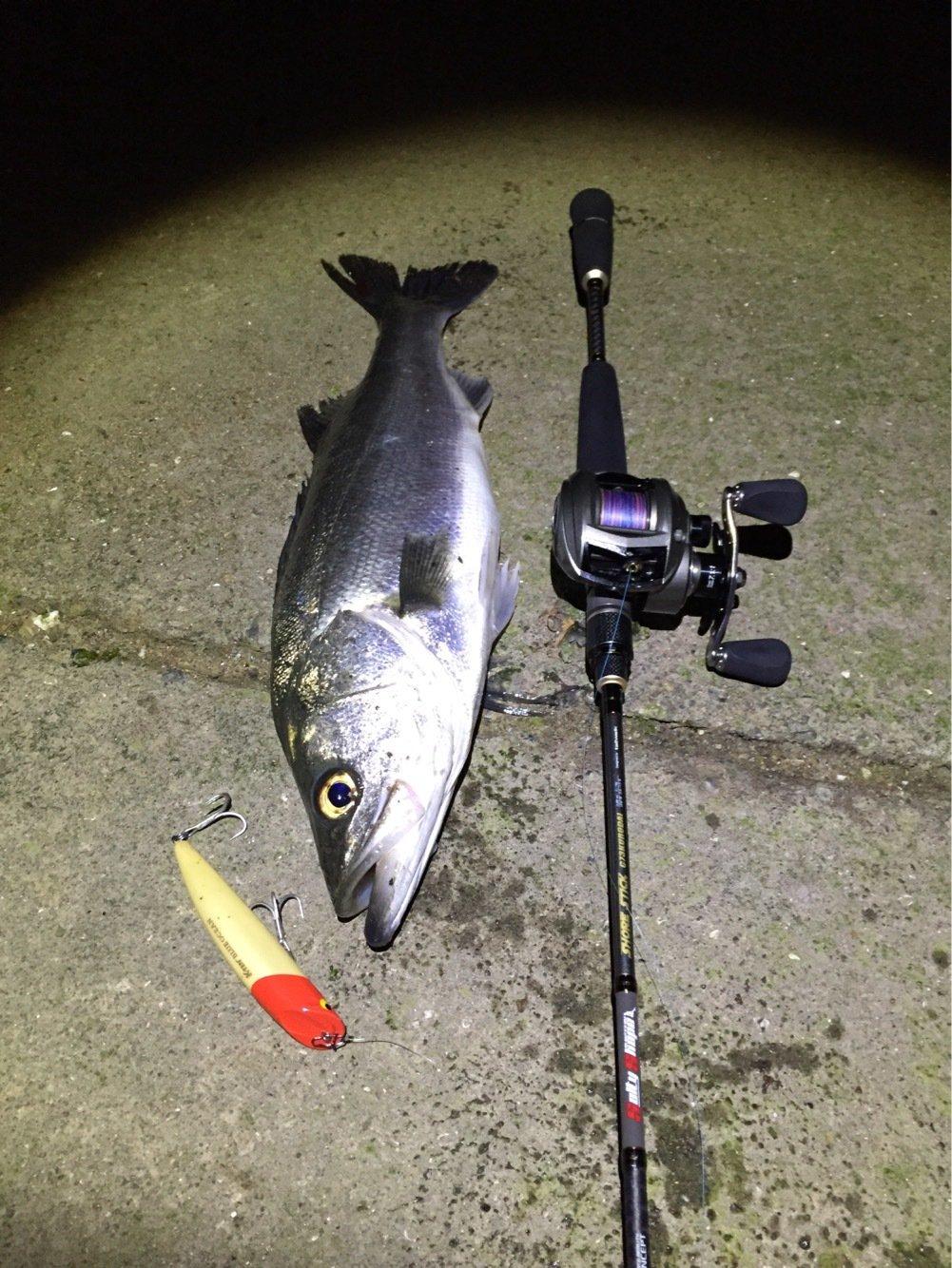 ジョンさんの投稿画像,写っている魚はスズキ