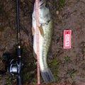 よずぼうやさんの福島県耶麻郡での釣果写真