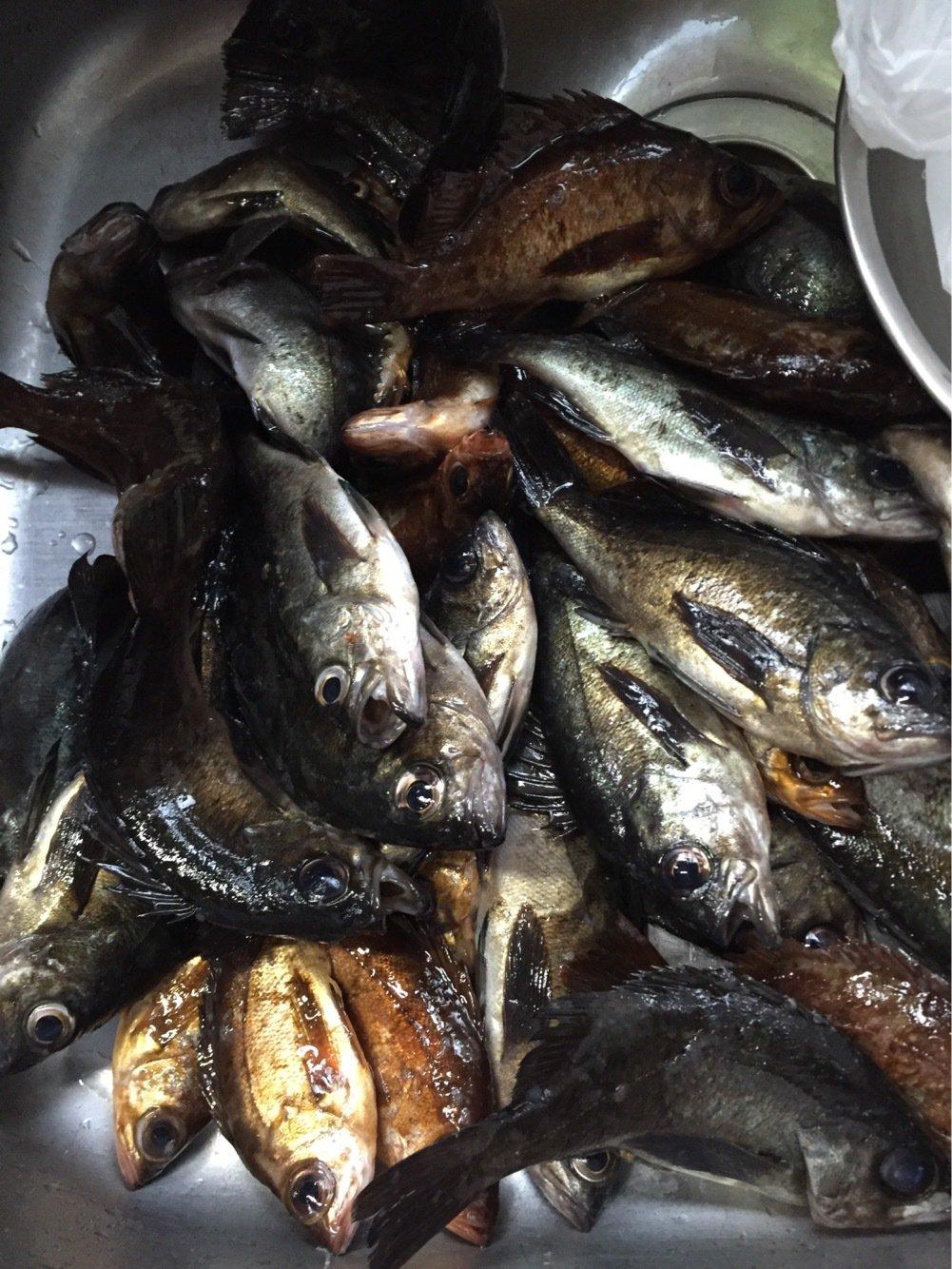 ひーさんの投稿画像,写っている魚はメバル