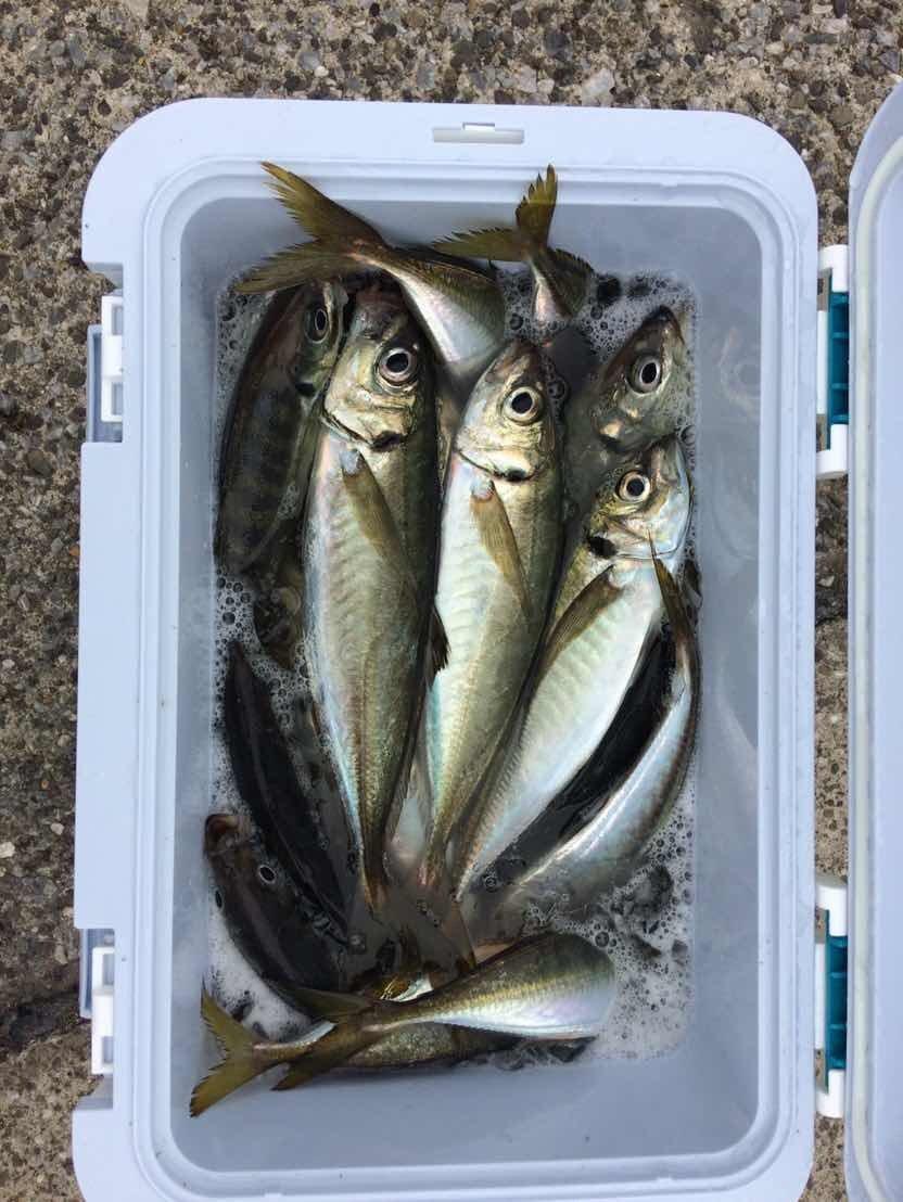 フジさんの投稿画像,写っている魚はアジ