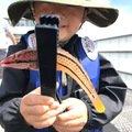 スズキ@愛宕浜さんの福岡県でのキュウセンの釣果写真