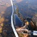 りょーたさんの栃木県那須烏山市での釣果写真
