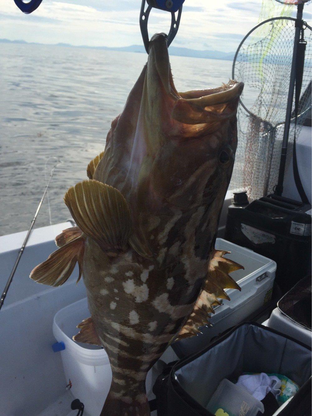 ヨシダさんの投稿画像,写っている魚はアラ