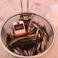 せいやさんの北海道釧路郡での釣果写真