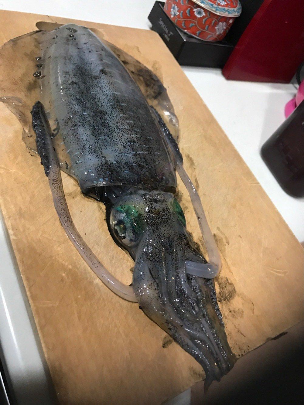 まけたくないさんの投稿画像,写っている魚はアオリイカ