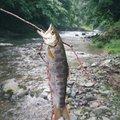フィーゴさんの鳥取県八頭郡での釣果写真