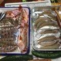釣キチyzooさんの広島県江田島市でのシロギスの釣果写真