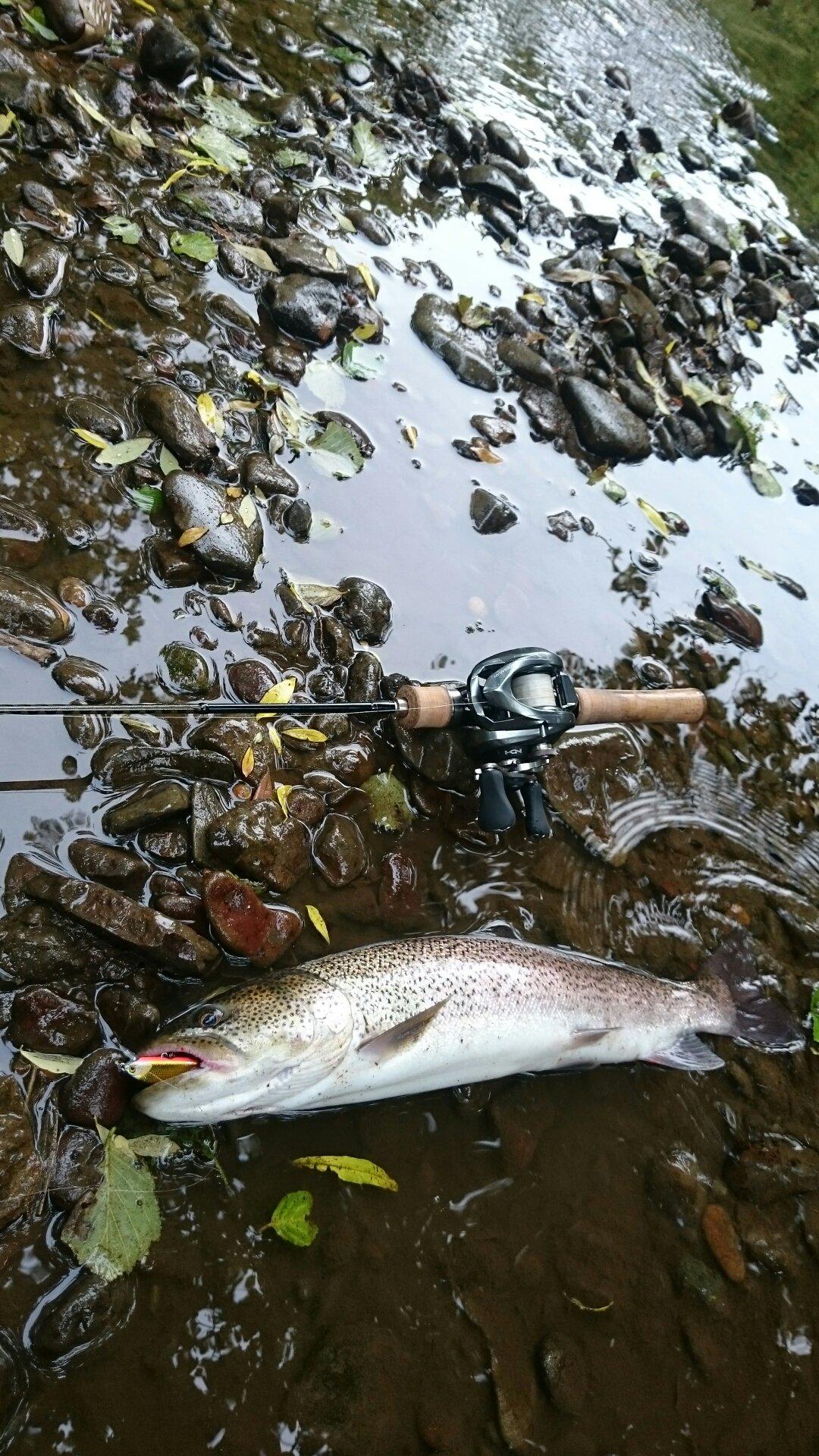 佐藤 俊之さんの投稿画像,写っている魚はイトウ