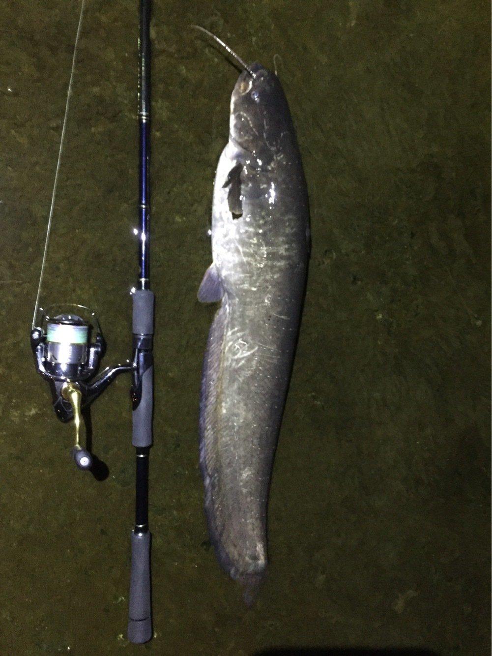ユウさんの投稿画像,写っている魚は