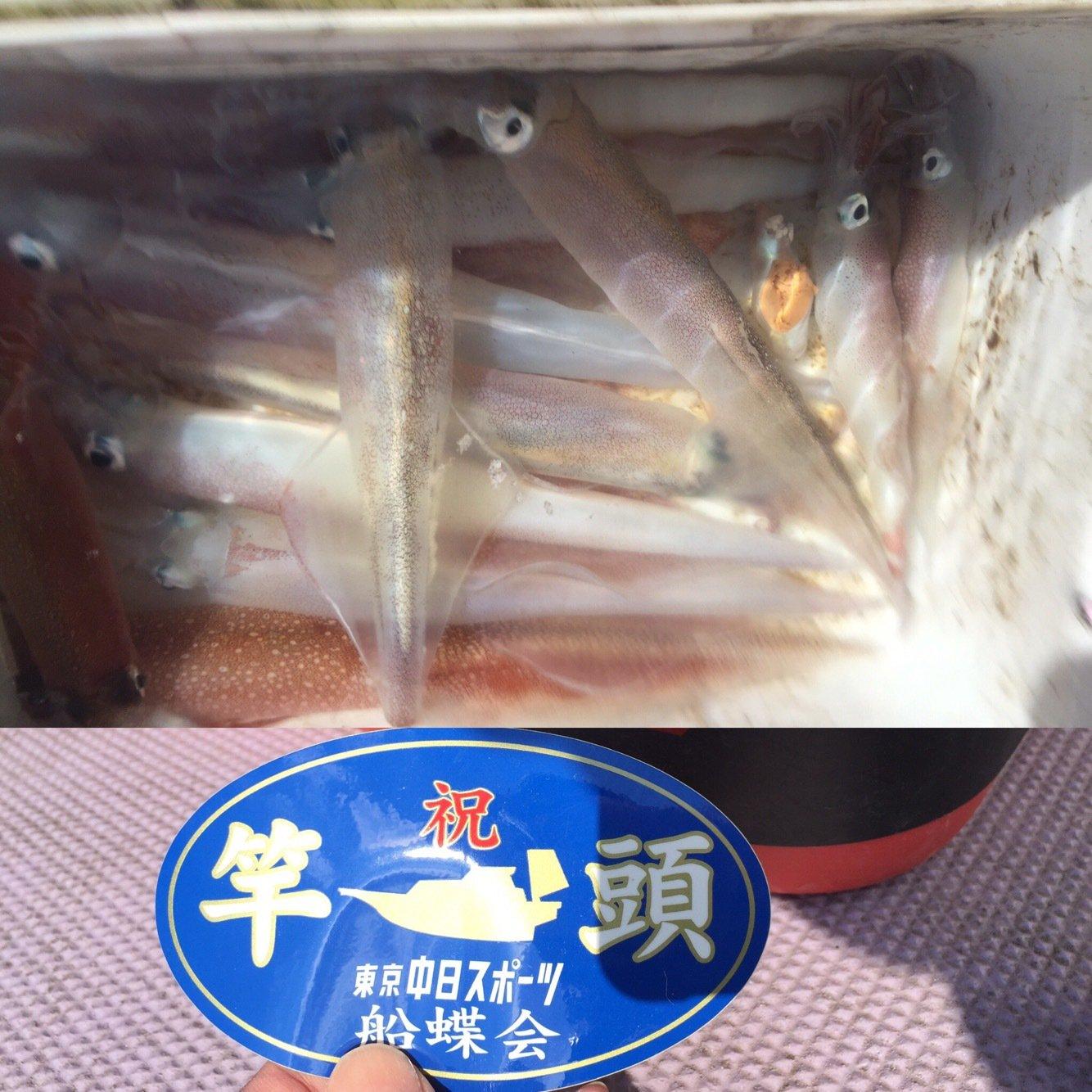 よーすけ。さんの投稿画像,写っている魚はヤリイカ
