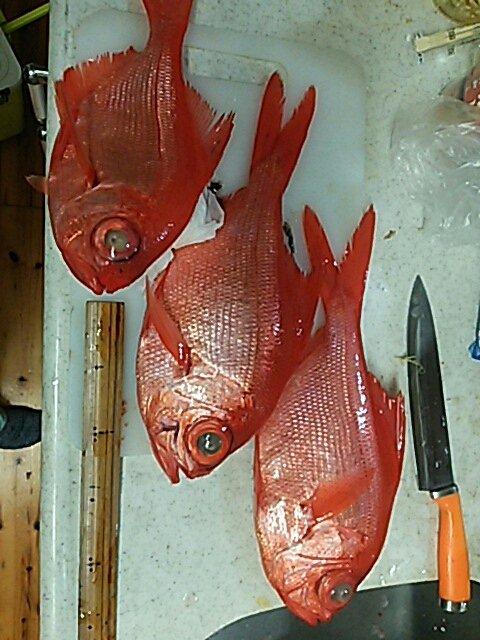 カズヒロさんの投稿画像,写っている魚はキンメダイ