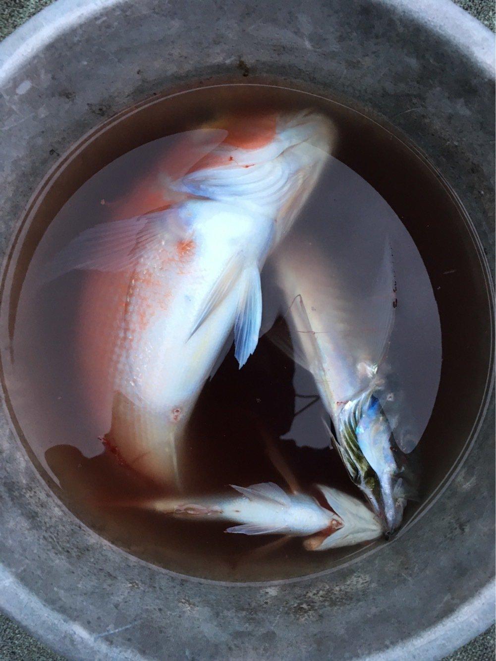ぬこ好きさんの投稿画像,写っている魚はアマダイ