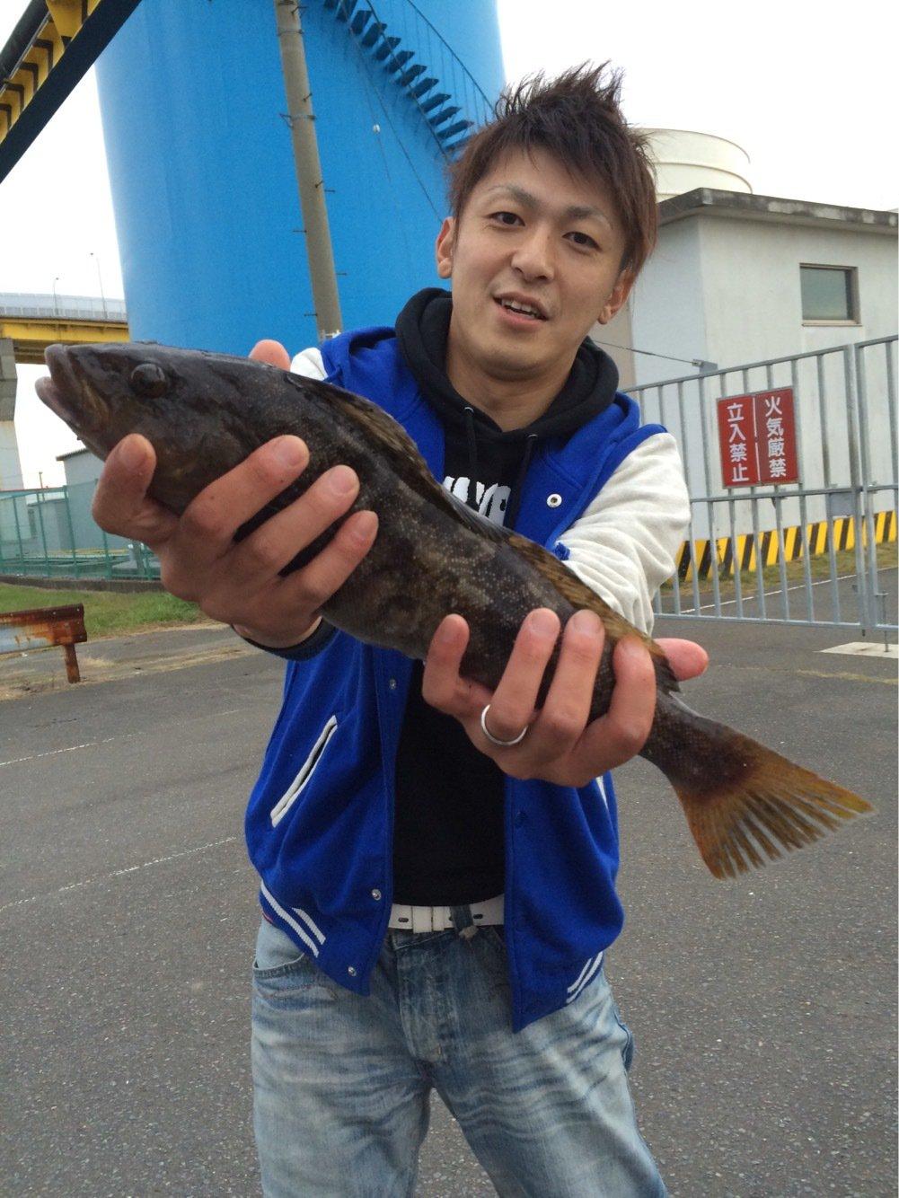 ちゃんたかさんの投稿画像,写っている魚はアイナメ