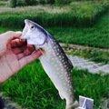 エンたそさんの北海道網走郡での釣果写真