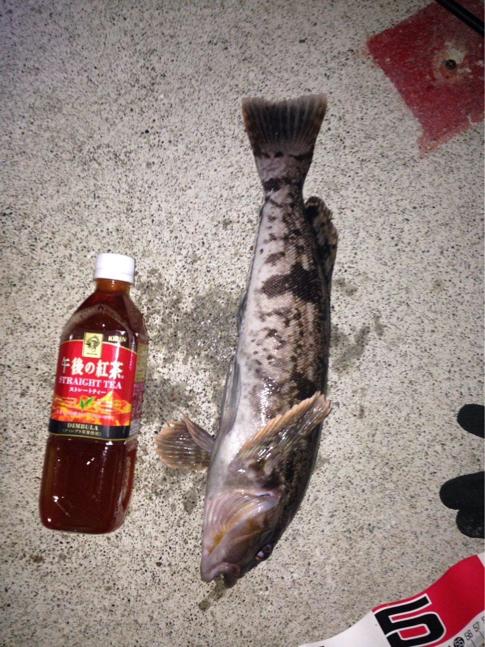 釣り人さんの投稿画像,写っている魚は