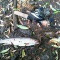 佐藤 俊之さんの北海道宗谷郡での釣果写真