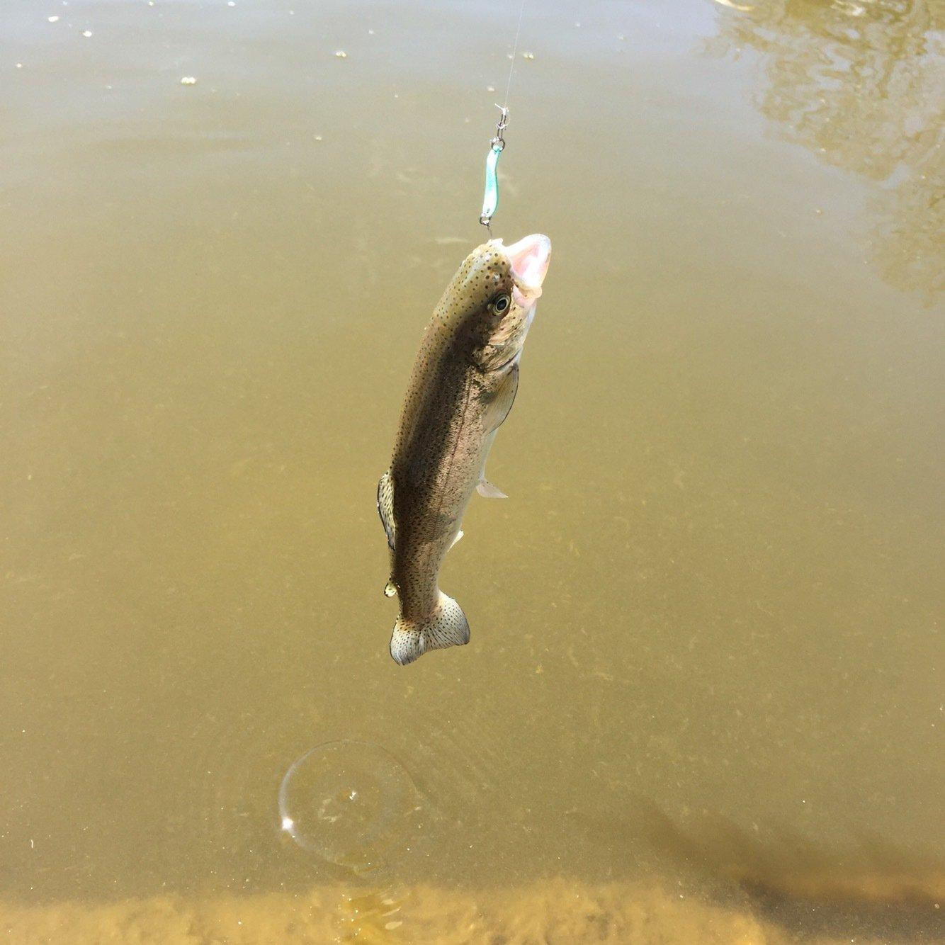 まうさんの投稿画像,写っている魚はニジマス