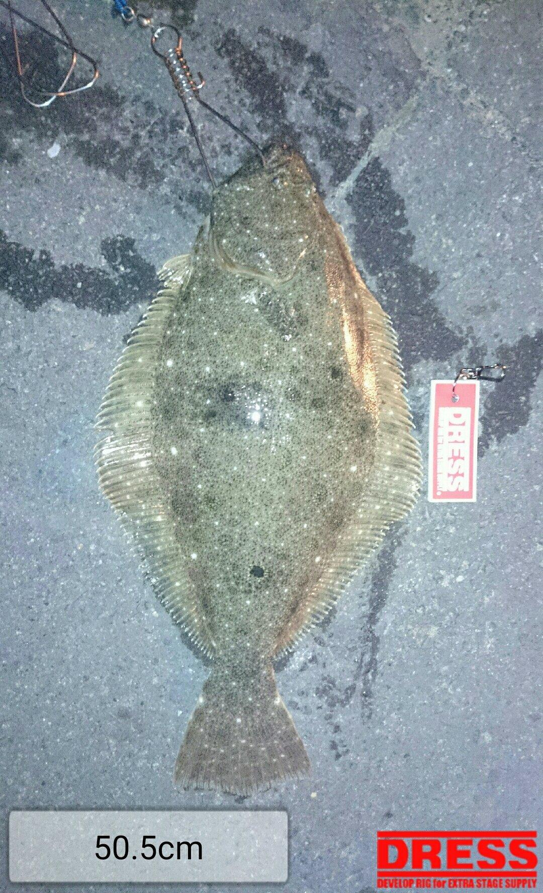でんさんの投稿画像,写っている魚はヒラメ