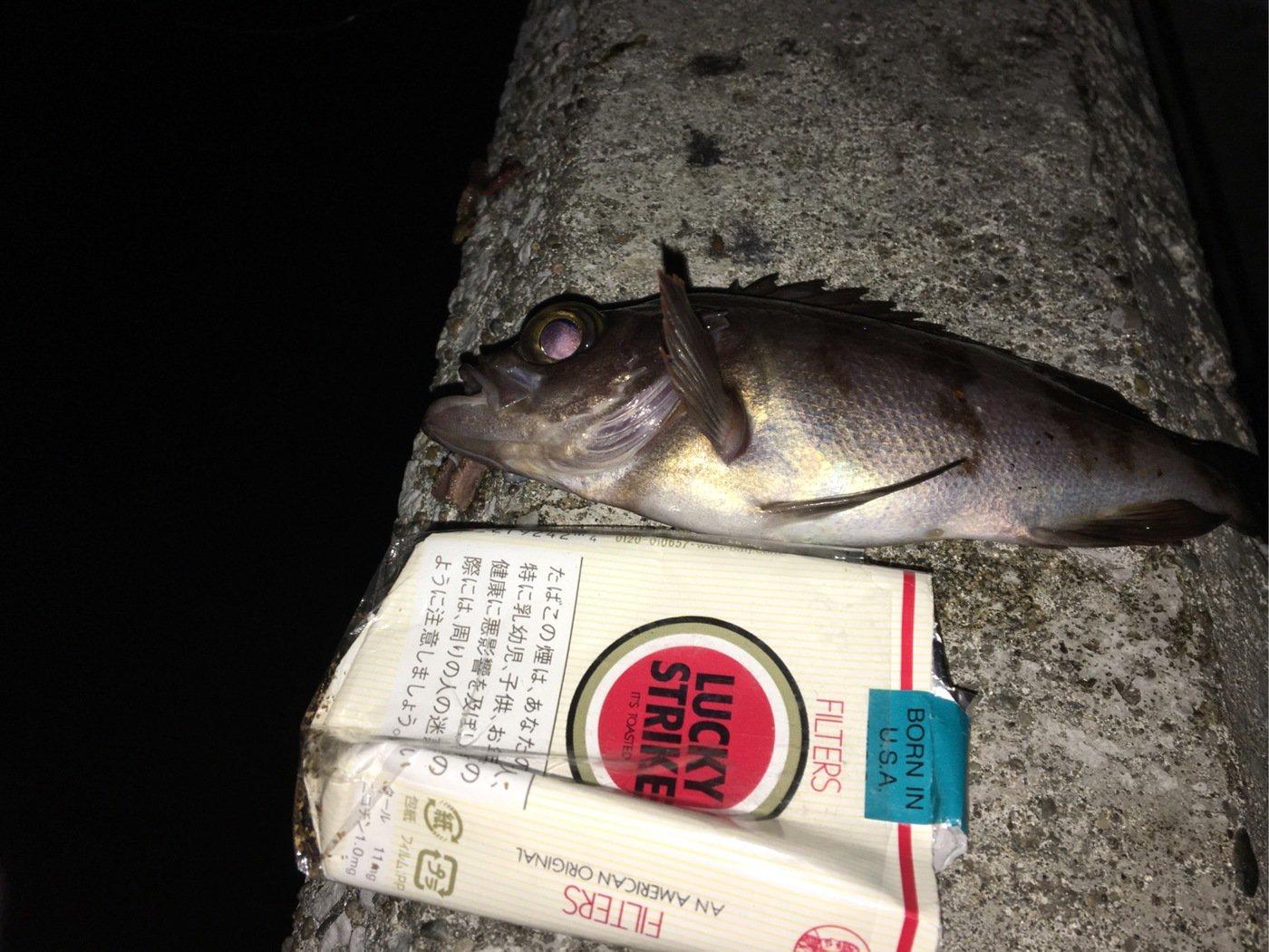 たかしさんの投稿画像,写っている魚はメバル