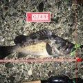 コダソン(SWS)さんの北海道幌泉郡での釣果写真