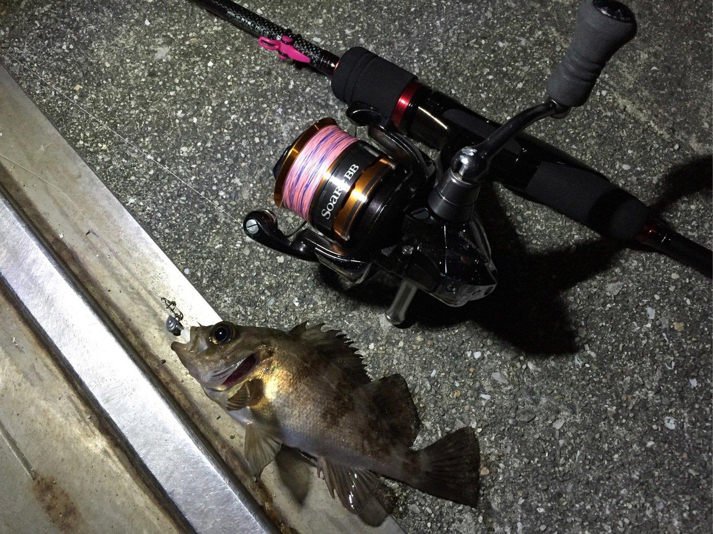 ヒキリュウさんの投稿画像,写っている魚はメバル