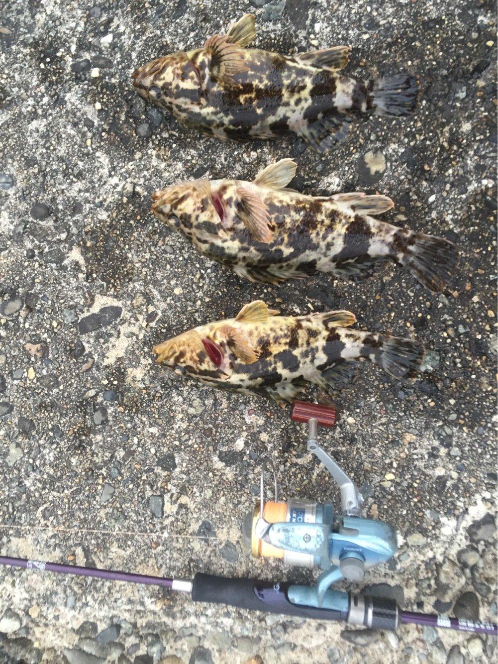 Hutさんの投稿画像,写っている魚はタケノコメバル