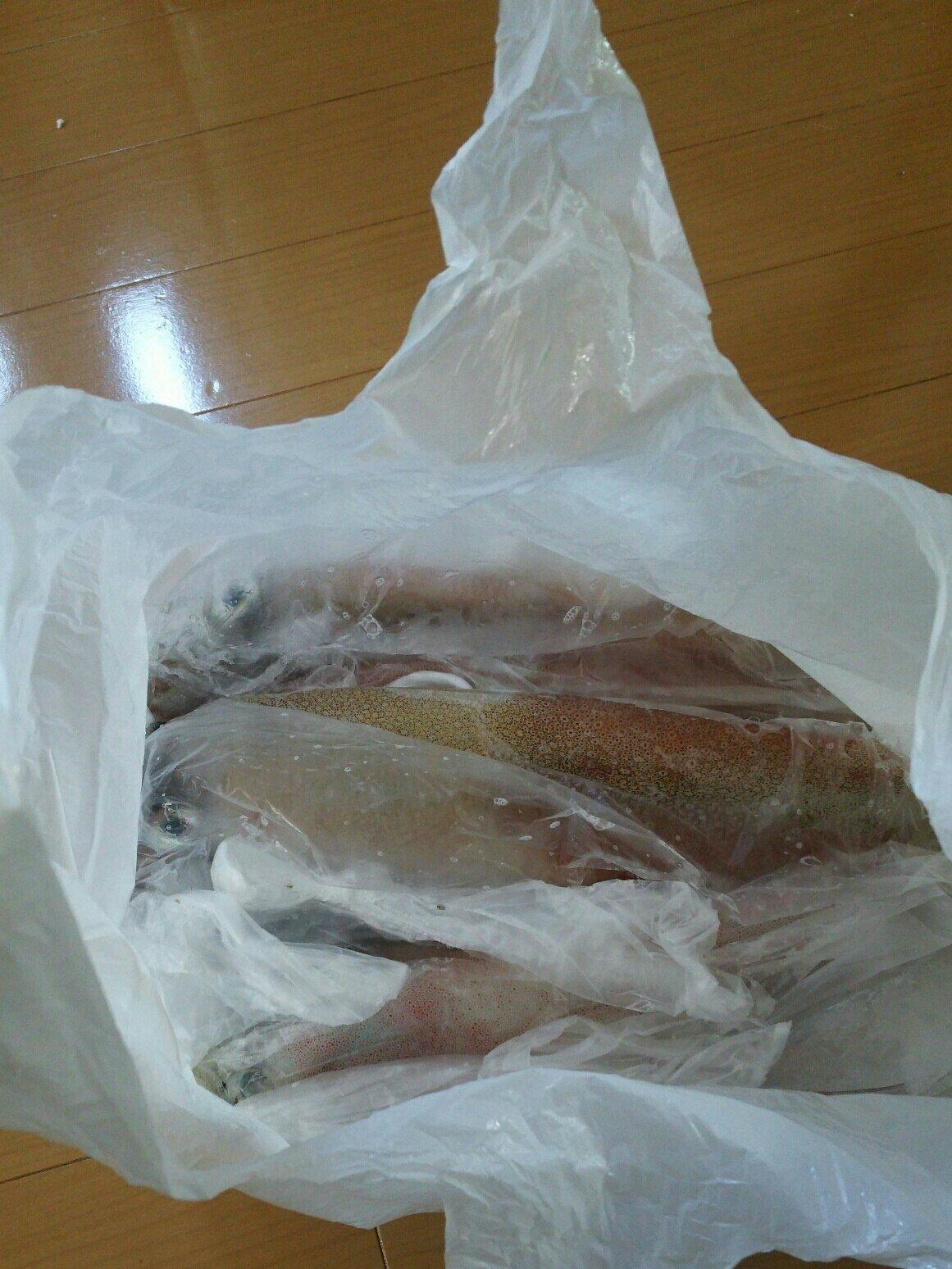 けいすけさんの投稿画像,写っている魚はヤリイカ