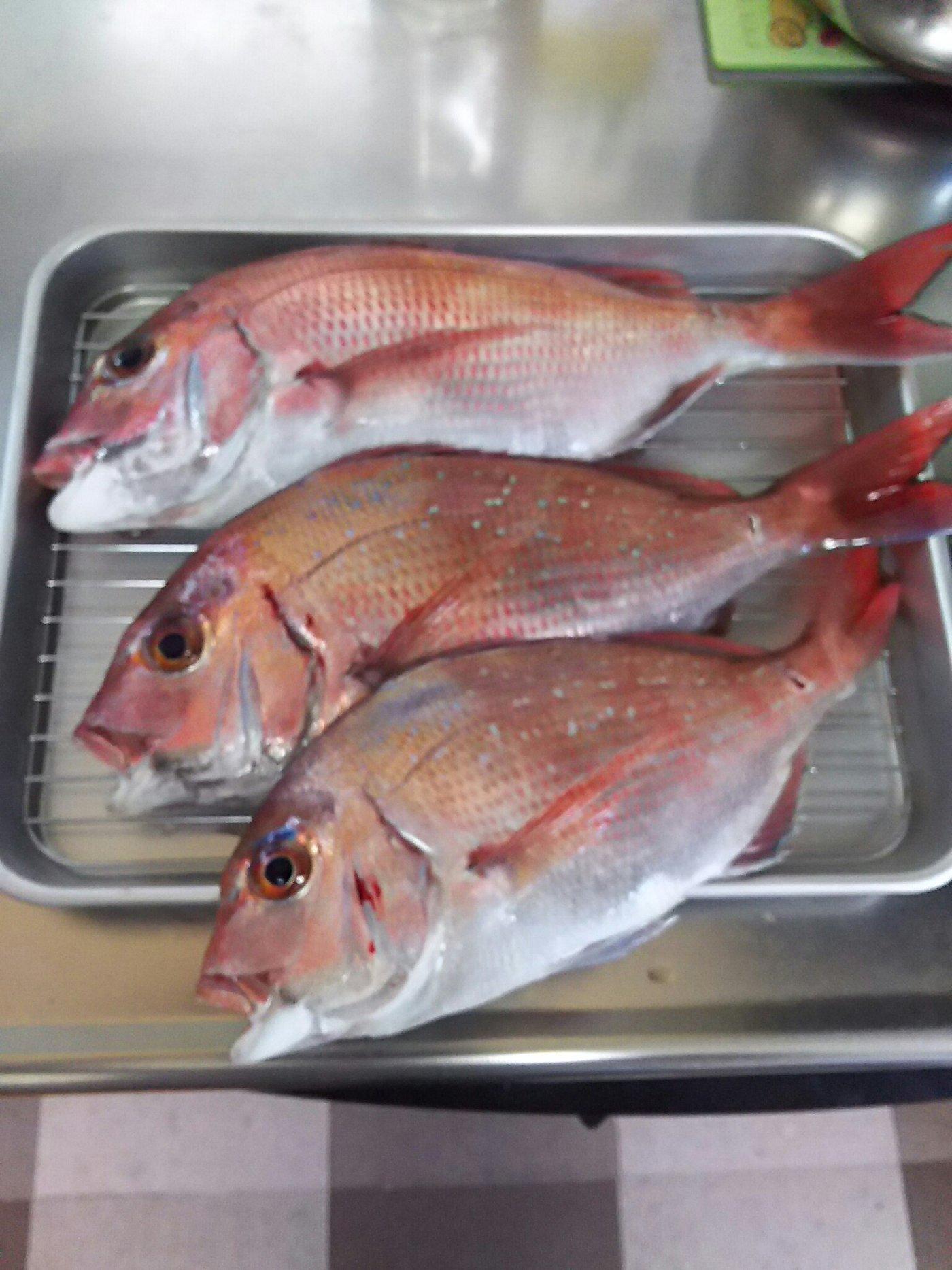 たつさんの投稿画像,写っている魚はマダイ