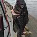 ぶちまコンジさんの埼玉県八潮市での釣果写真