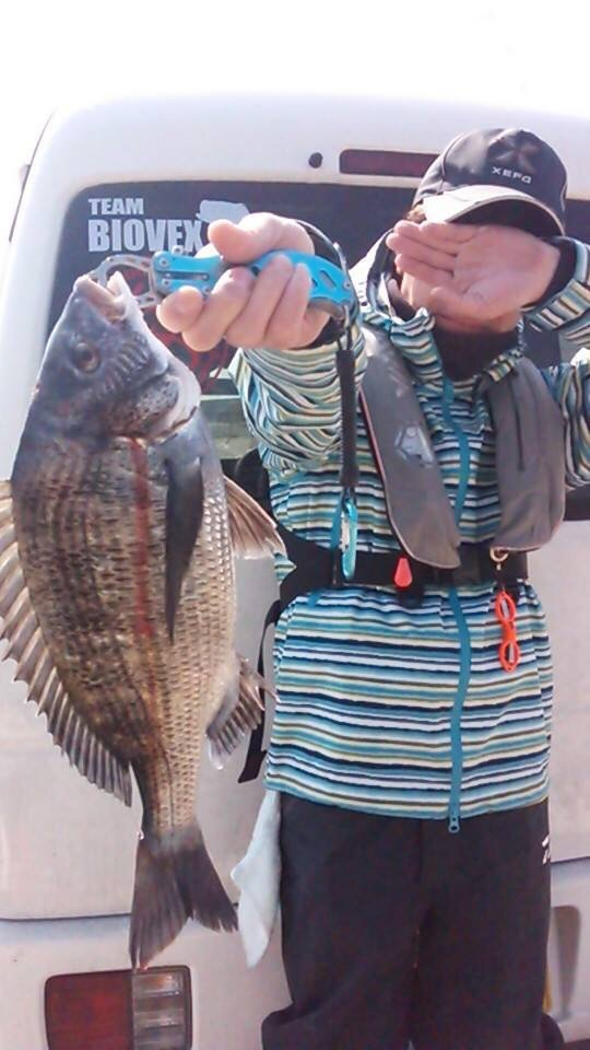 ミヤモトミチヒコさんの投稿画像,写っている魚はクロダイ