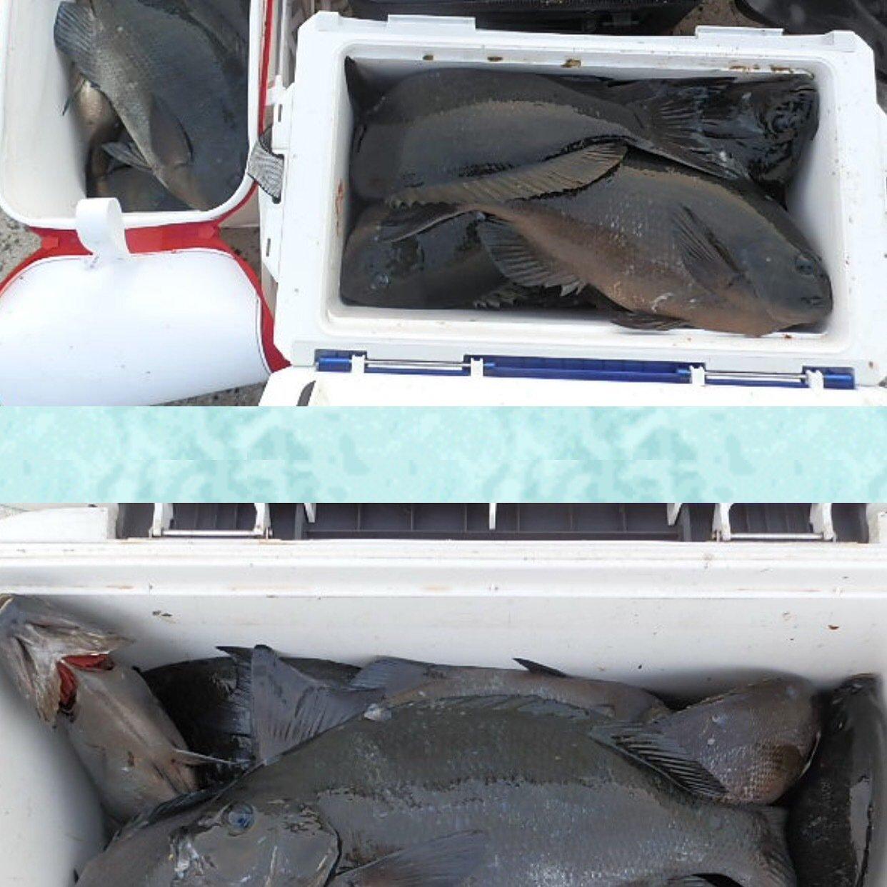 sayakaさんの投稿画像,写っている魚はクロメジナ