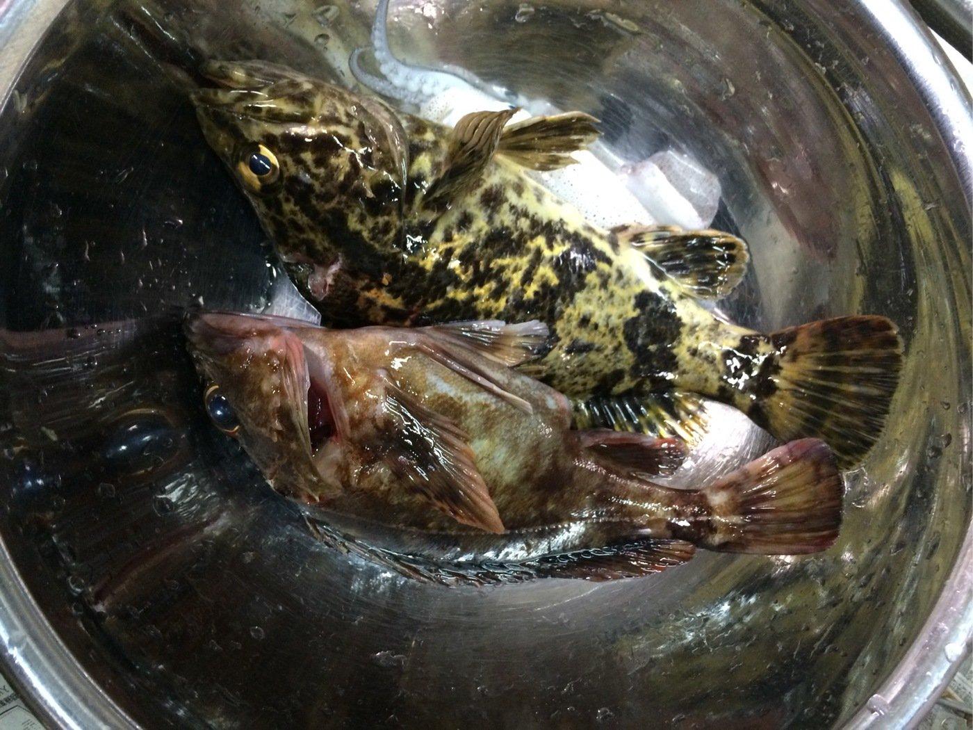 大体坊主さんの投稿画像,写っている魚は