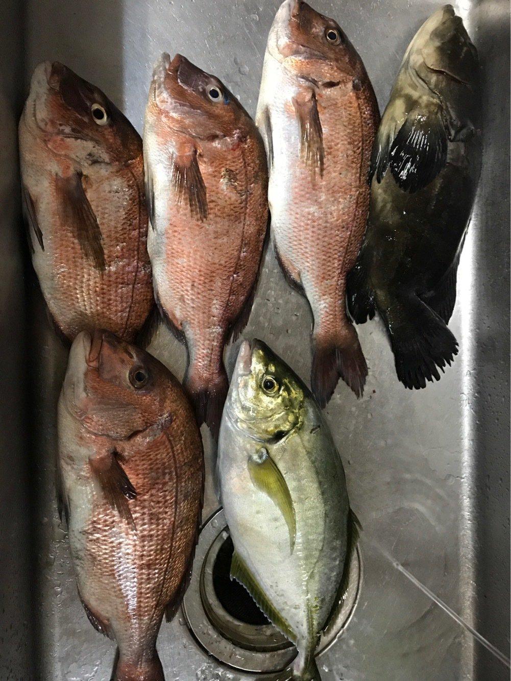 釣りバカさんの投稿画像,写っている魚は