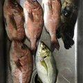 釣りバカさんの大阪府交野市での釣果写真