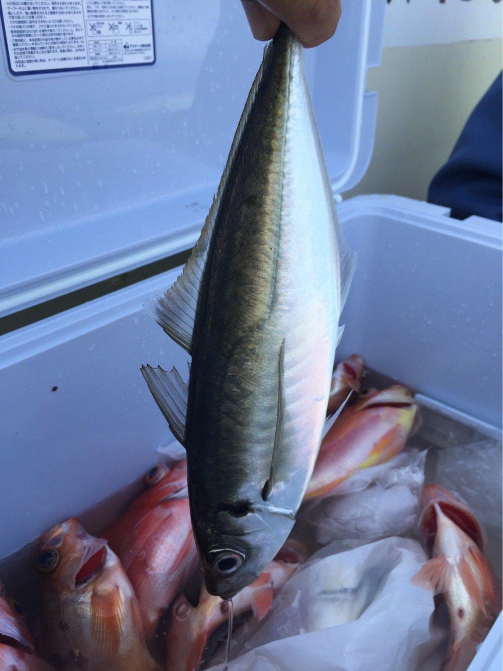 長嶋賢治さんの投稿画像,写っている魚はアジ