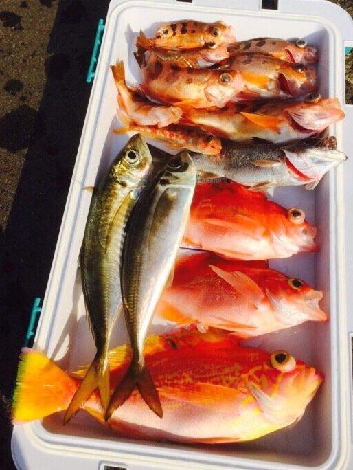 長嶋賢治さんの投稿画像,写っている魚は
