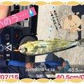 慧サマさんの神奈川県藤沢市でのシイラの釣果写真