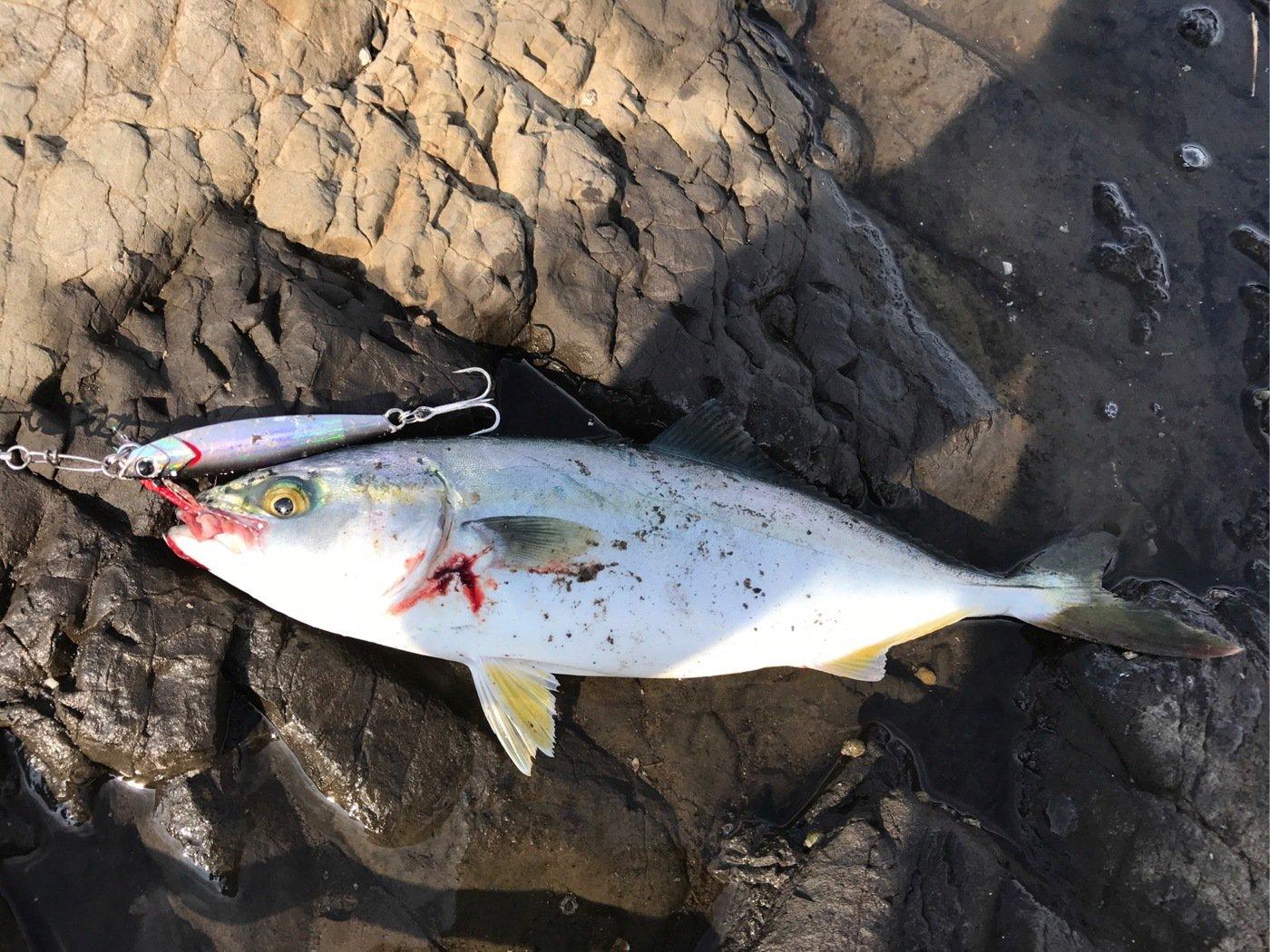 ザキヤマさんの投稿画像,写っている魚はブリ