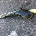 つよしさんの静岡県田方郡での釣果写真