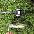 ユージンさんの奈良県宇陀市での釣果写真