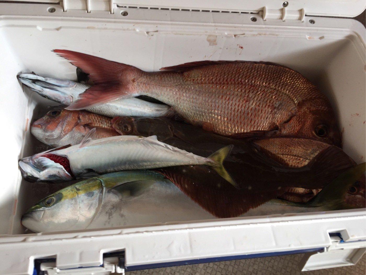 tatsukiさんの投稿画像,写っている魚はマダイ