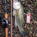 よずぼうやさんの新潟県三条市での釣果写真
