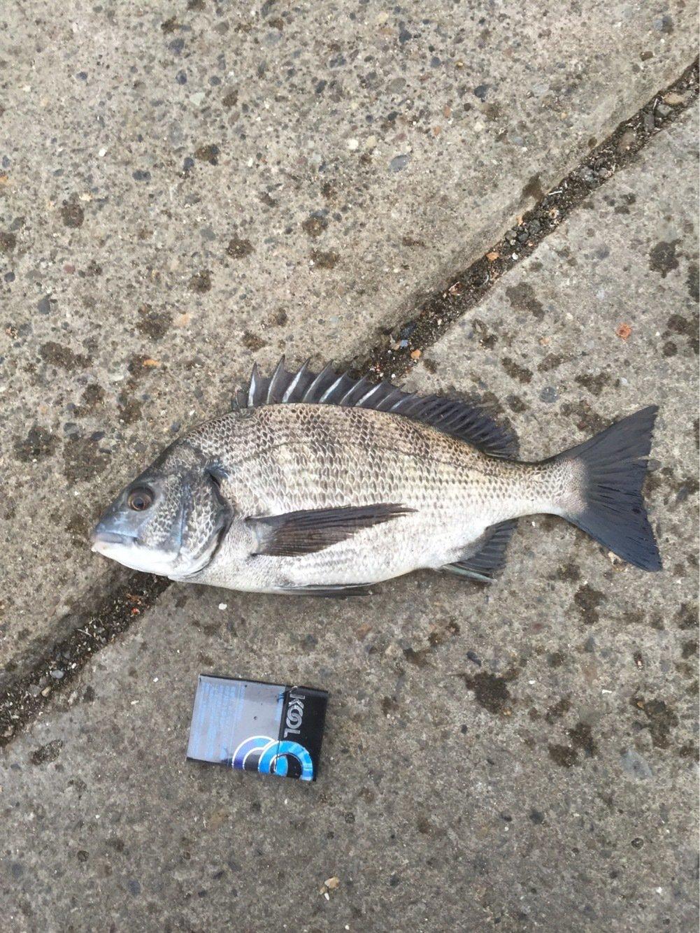 吉ぞーさんの投稿画像,写っている魚は