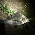 ドドレファンさんの大分県玖珠郡での釣果写真