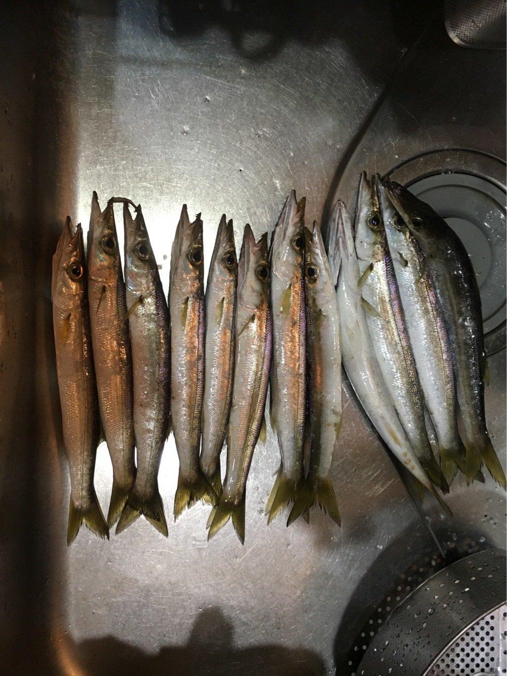 ヒロッシーさんの投稿画像,写っている魚はカマス