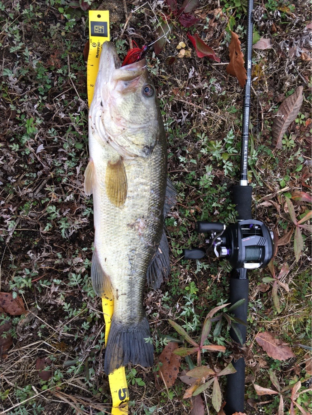 マダオさんの投稿画像,写っている魚はブラックバス