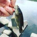 アカミミさんの東京都日野市での釣果写真
