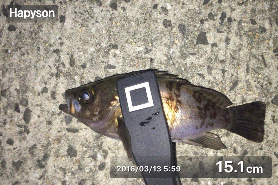 のすけさんの投稿画像,写っている魚はメバル